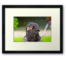 Batlic Eagle Framed Print
