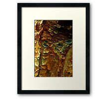 Scales of Bark Framed Print