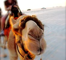 Ned the Camel by Blake Johnson