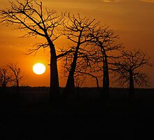 Boab Sunset by BonnieH