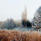 Winterdreamings by HermanToothrot