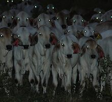 brahmans at twilight by BonnieH