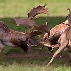 Rutting Fallow Deer by Neil Bygrave (NATURELENS)