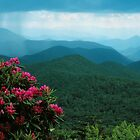 RHODODENDRON by Chuck Wickham