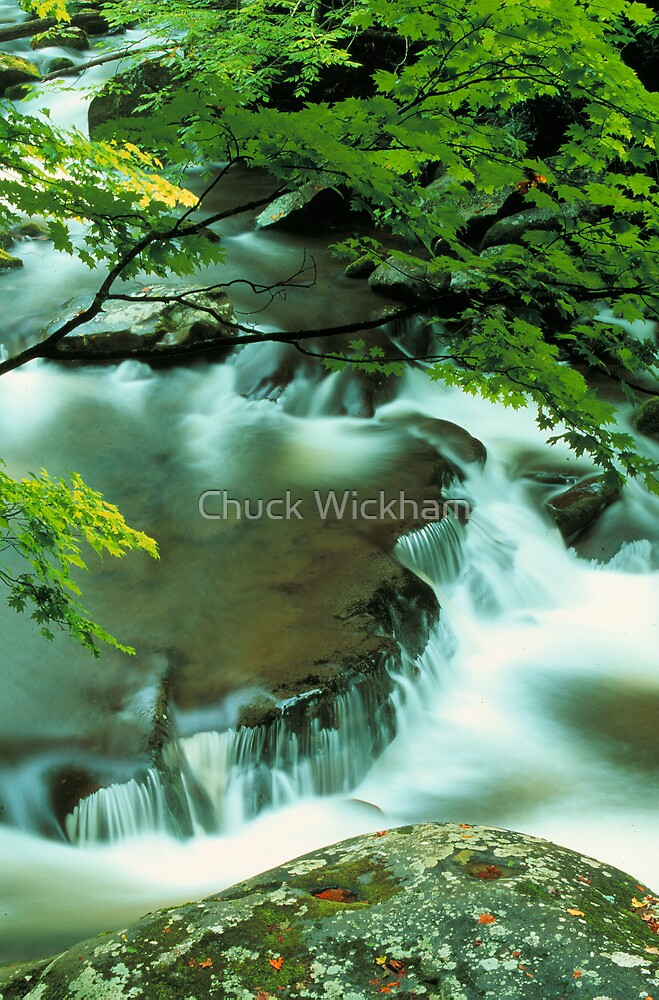 MIDDLE PRONG LITTLE RIVER by Chuck Wickham