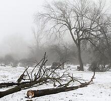 Logging by AbigailJoy