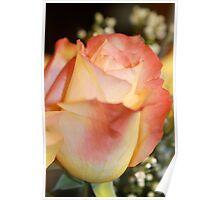 A pretty peach Rose Poster