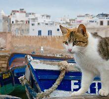 Maroc - Chat d'Essaouira by Jean-Luc Rollier