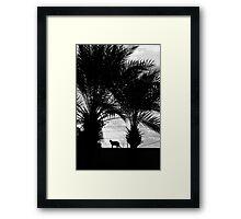 Maroc - Chat de Marrakech Framed Print