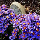 Tombstone Mums... by lareejc