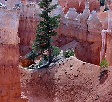 Rooted in Sandstone by Laurie Puglia