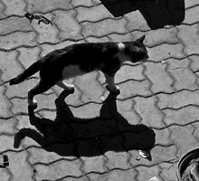 Maroc - Chat d'ombre by Jean-Luc Rollier