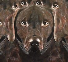 Abstract Chocolate Labrador by Tidwell