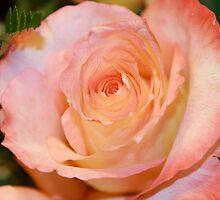 How do I describe this beautiful Flower? by ZeeZeeshots