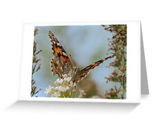 Drinking Nectar Greeting Card