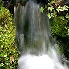 """Streams of Living Water"" by Bradley Shawn  Rabon"