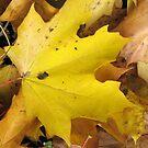 Autumn Leaves by Debbie Vine