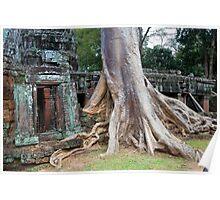 Ta Prohm Temple Ruins in Cambodia Poster