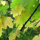 Autumn leaves 2 by Debbie Vine