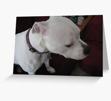 Pit Bull Thinking Greeting Card