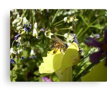 pollen hunt Canvas Print