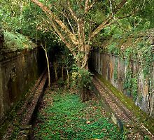 Jungle Temple Ruins in Cambodia by Artur Bogacki