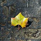 Leaf on a Bridge by CindyG