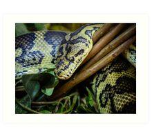 Carpet PythonCarpet python close up Art Print