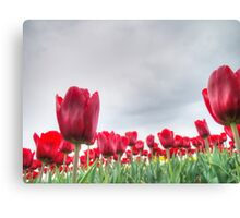 Red tulips 4 Canvas Print