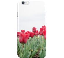 Red tulips 3 iPhone Case/Skin
