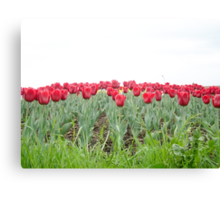 Red tulips 2 Canvas Print