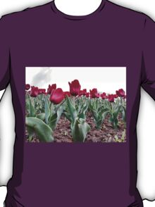Red tulips 8 T-Shirt