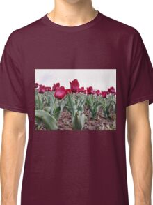 Red tulips 8 Classic T-Shirt