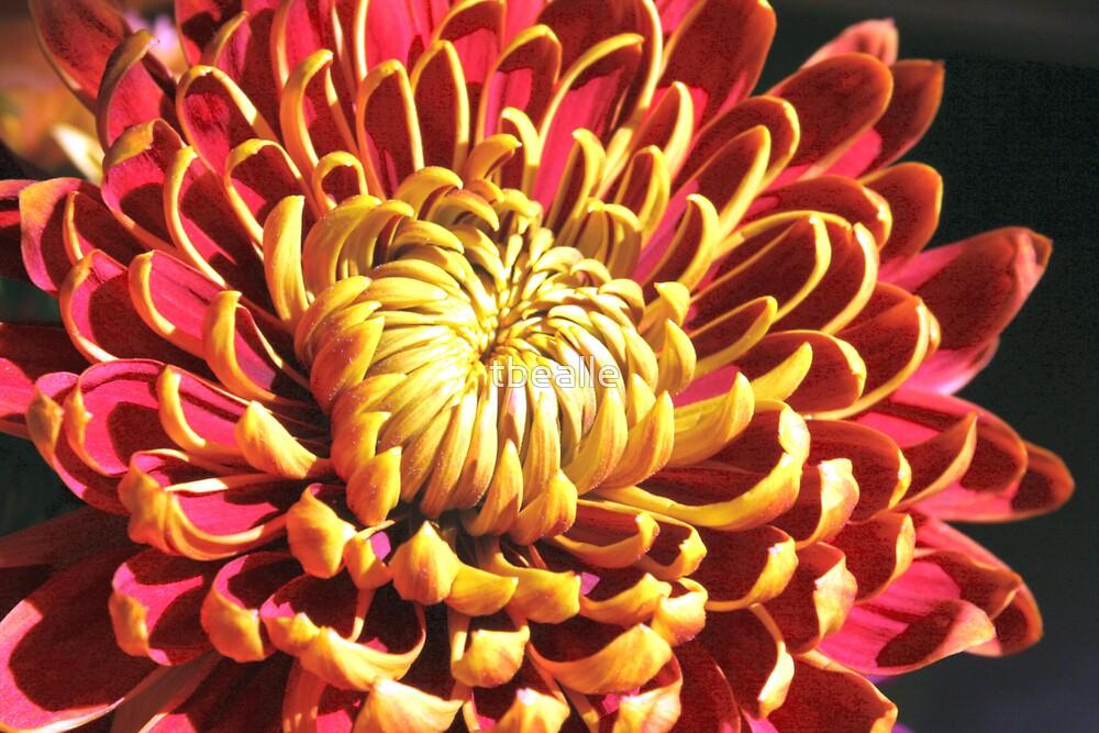 Fall Flower by Terri~Lynn Bealle