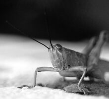 Hopper by Nat Douglas (njd photography)