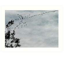 Geese Flying South Art Print