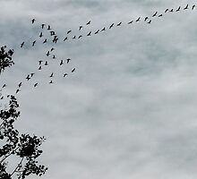Geese Flying South by MaeBelle