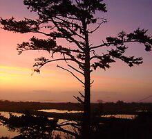 Sunset Tree by Sheri Scherbarth
