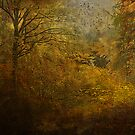 Fall forest splendor by Jeff Burgess