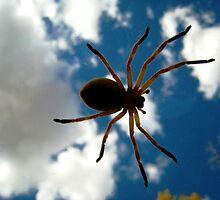 Arachnid Invasion! by jansnow