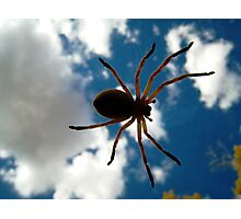 Arachnid Invasion! Photographic Print