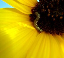 Sunflower & Caterpillar by elizabethrose05