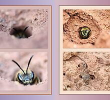 Burrowing Insect collage by missmoneypenny