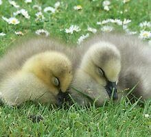 Little Sleepy Heads by AARDVARK