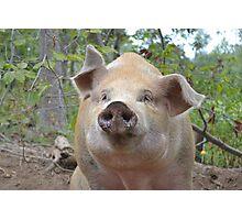 Curious Miss Piggy  Photographic Print