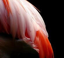 Flamingo Feathers by Tamara  Kenneally