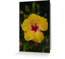 Hibiscus - yellow with red Greeting Card