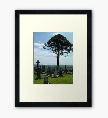 Graveyard Monkey-puzzle Framed Print