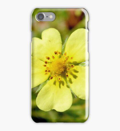 Sulfur Cinquefoil  iPhone Case/Skin