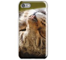 Cat Nap iPhone Case/Skin